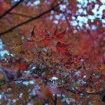 紅葉と養老の滝