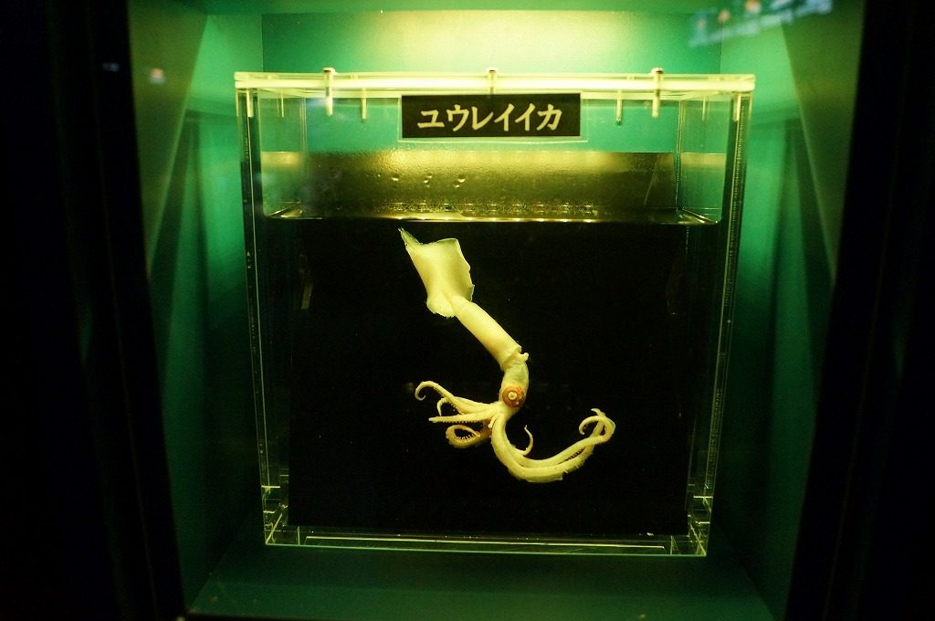 沼津深海魚水族館