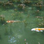 まるでモネの絵画、関市にある「モネの池」に行ってみた