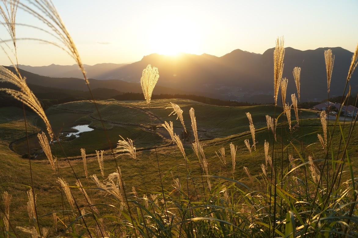 曽爾高原で黄金に輝くススキを見る!